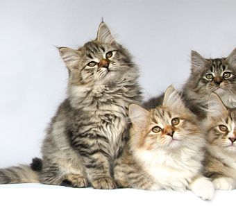 curiosities about cats